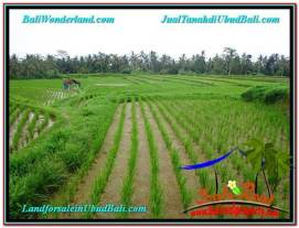FOR SALE Beautiful PROPERTY 920 m2 LAND IN Ubud Payangan TJUB575