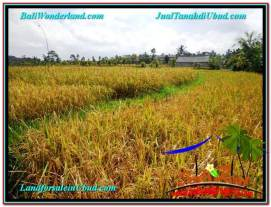 FOR SALE Magnificent PROPERTY LAND IN Ubud Tegalalang BALI TJUB606