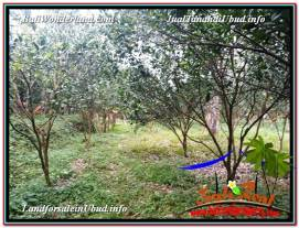 FOR SALE Magnificent LAND IN Ubud Tegalalang BALI TJUB614