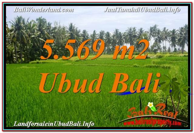 FOR SALE Magnificent 5,569 m2 LAND IN Ubud Center BALI TJUB642