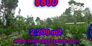 Exotic Land for sale in Ubud Bali, rice paddy view in Ubud Tegalalang – TJUB348