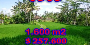 Land for sale in Ubud Bali 16 Ares in Ubud Tegalalang