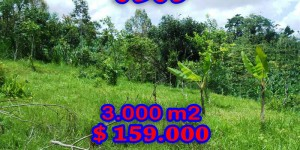 Land for sale in Bali 30 Ares in Ubud Payangan