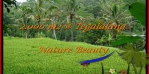 Magnificent PROPERTY UBUD BALI 2,000 m2 LAND FOR SALE TJUB490