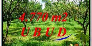 Affordable 4,770 m2 LAND SALE IN UBUD TJUB598