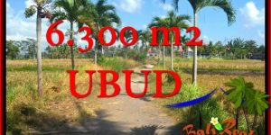 Affordable 6,300 m2 LAND FOR SALE IN UBUD BALI TJUB662