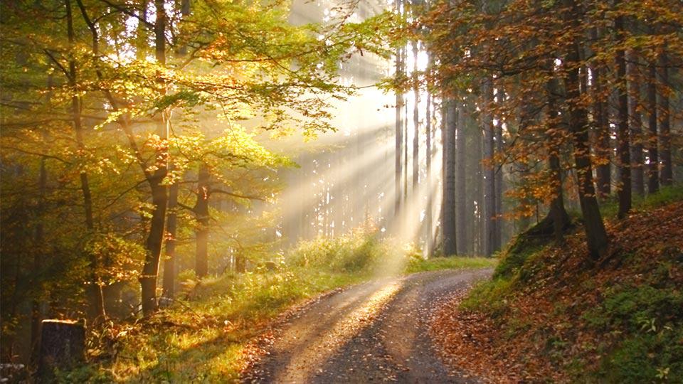 Wald in der Region um Neudrossenfeld