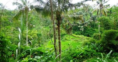 Ubud Bali Land for sale