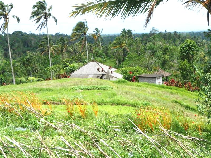 Land for sale in Tabanan Bali Mountain view  – TJTB037