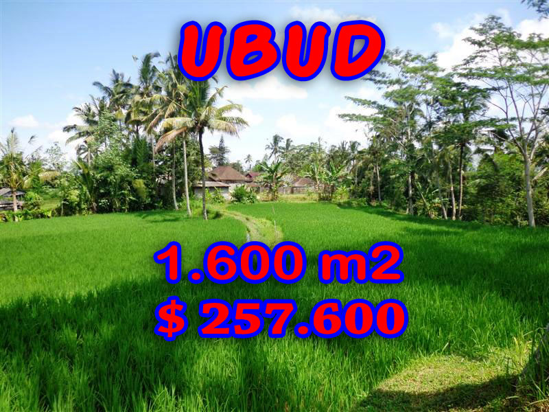 Land for sale in Ubud Bali Terraced rice fields