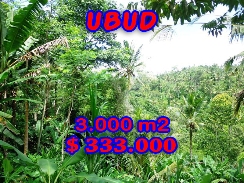 Land for sale in Ubud Bali 3.000 sqm affordable price