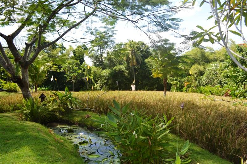 Land for sale in Canggu Bali 3,475 m2 with Close to the beach