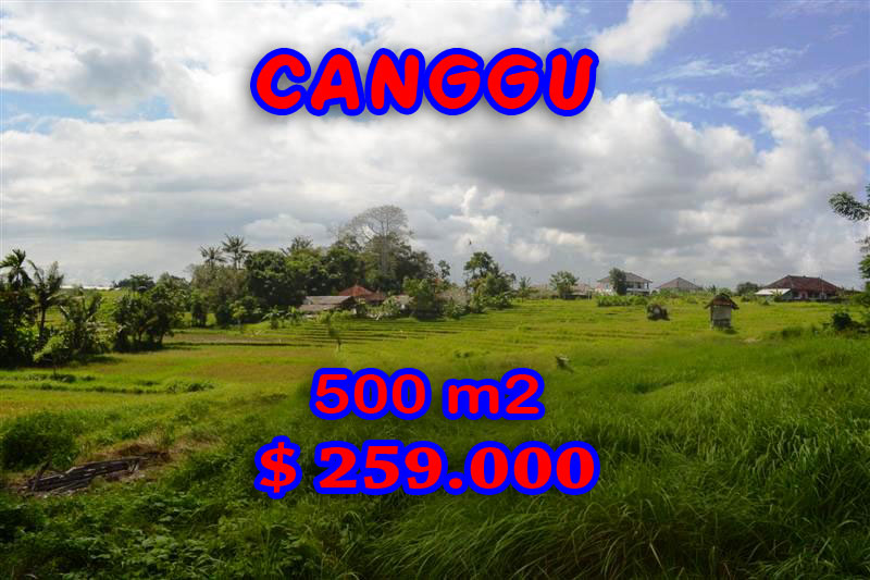 Fantastic Land for sale in Bali, rice paddy view land for sale in Canggu Batu Bolong