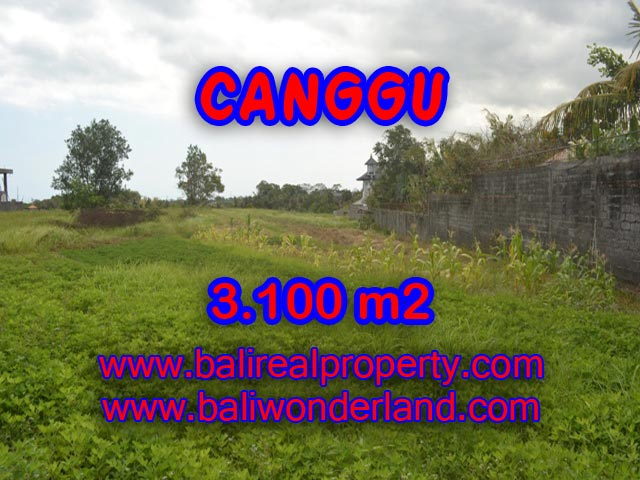 Outstanding Property for sale in Bali, land for sale in Canggu Bali  – 3,100 sqm @ $ 539