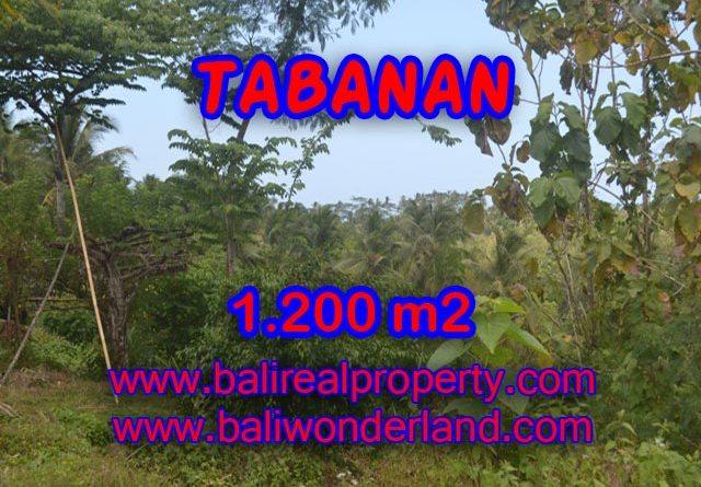 Property sale in Bali, Beautiful land for sale in Tabanan Bali – TJTB072