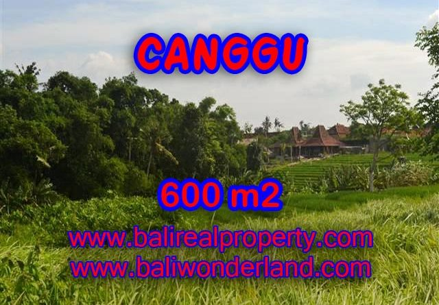 Magnificent Land for sale in Bali, paddy view in Canggu Bali – TJCG130