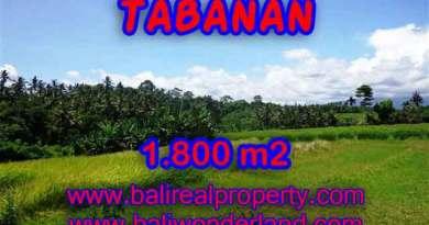 Land for sale in Tabanan Bali, Unbelievable view in Tabanan Selemadeg – TJTB106