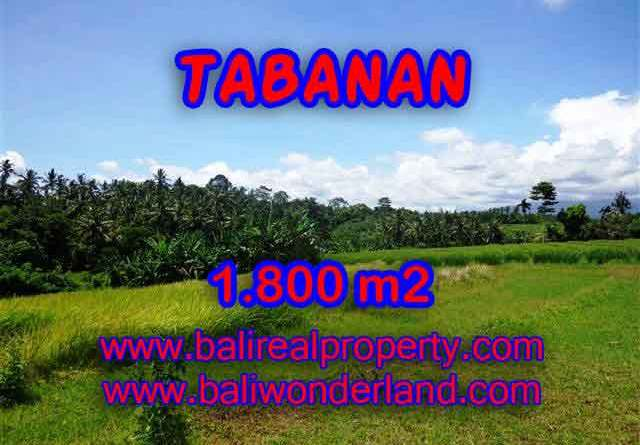 Land for sale in Tabanan Bali, Unbelievable view in Tabanan Selemadeg – TJTB106