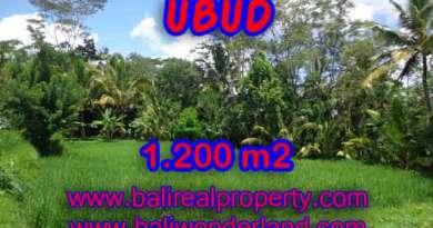 Land for sale in Bali, wonderful view in Ubud Bali – TJUB404