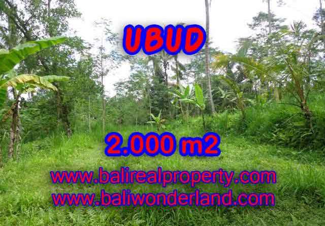 Amazing Land in Bali for sale in Ubud Tegalalang Bali – TJUB406
