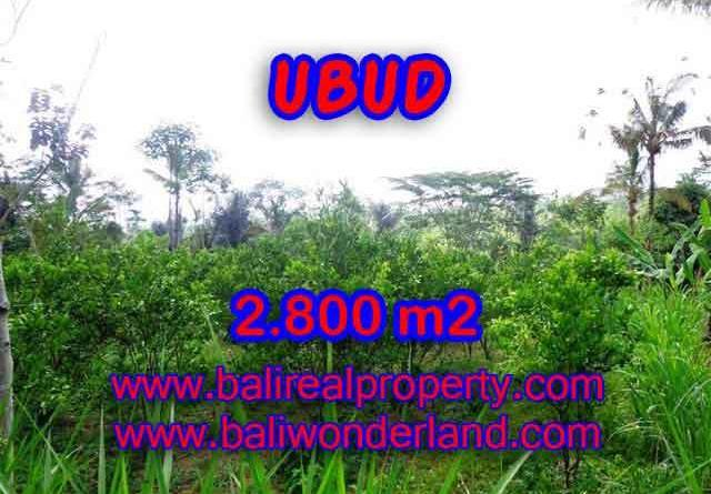 Land in Ubud Bali for sale, nice view in Ubud Tegalalang Bali – TJUB375