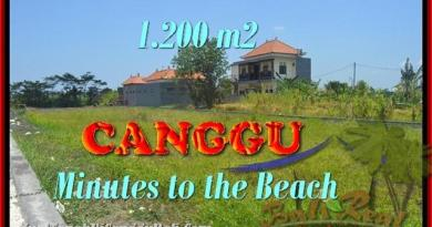 Exotic 1.200 m2 LAND SALE IN Canggu Kayutulang BALI TJCG166