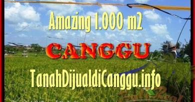 Magnificent PROPERTY 1.000 m2 LAND SALE IN CANGGU TJCG154