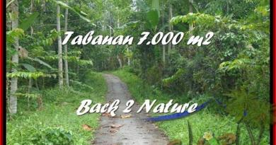 FOR SALE Exotic 7.000 m2 LAND IN TABANAN TJTB176