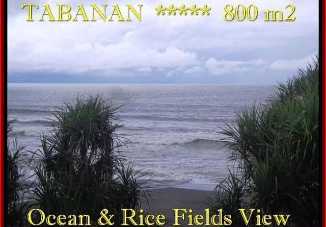 Affordable LAND FOR SALE IN Tabanan Selemadeg BALI TJTB183