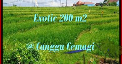 Magnificent PROPERTY 200 m2 LAND SALE IN CANGGU TJCG170