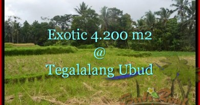 Beautiful 4,200 m2 LAND FOR SALE IN UBUD BALI TJUB461