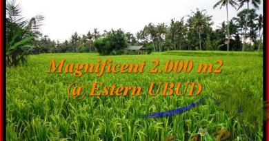 Exotic LAND SALE IN Ubud Pejeng BALI TJUB485