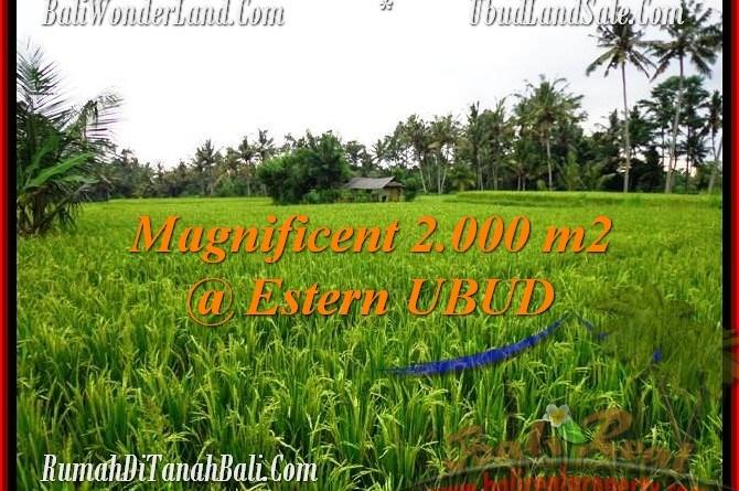 Exotic LAND SALE IN Ubud Pejeng BALI TJUB485