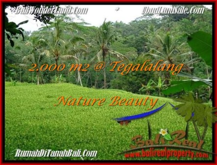 Beautiful UBUD BALI 2,000 m2 LAND FOR SALE TJUB490