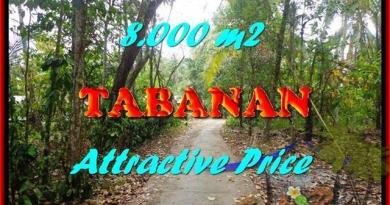 Affordable 8,000 m2 LAND FOR SALE IN TABANAN BALI TJTB161