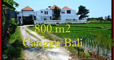 Affordable PROPERTY 800 m2 LAND SALE IN CANGGU TJCG194