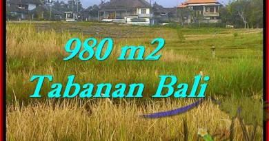 FOR SALE 980 m2 LAND IN TABANAN TJTB244