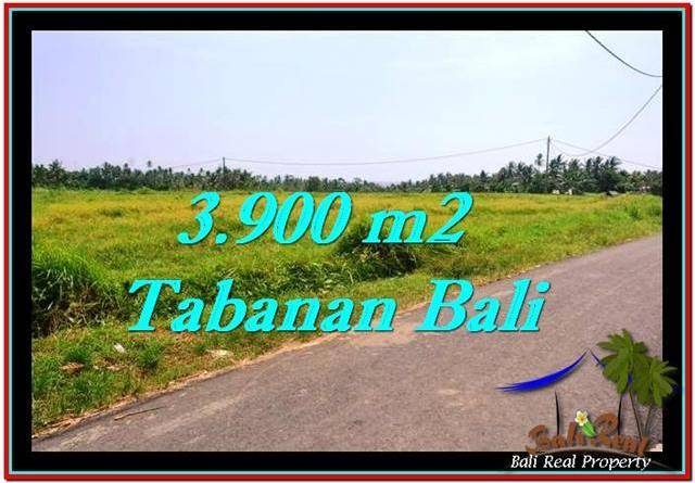 Exotic PROPERTY 3,900 m2 LAND FOR SALE IN Tabanan Selemadeg TJTB258