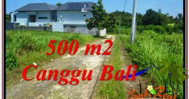 Beautiful LAND IN Canggu Brawa BALI FOR SALE TJCG201