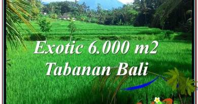 LAND IN Tabanan Penebel BALI FOR SALE TJTB306