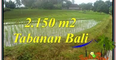 Beautiful PROPERTY 2,150 m2 LAND SALE IN TABANAN TJTB312
