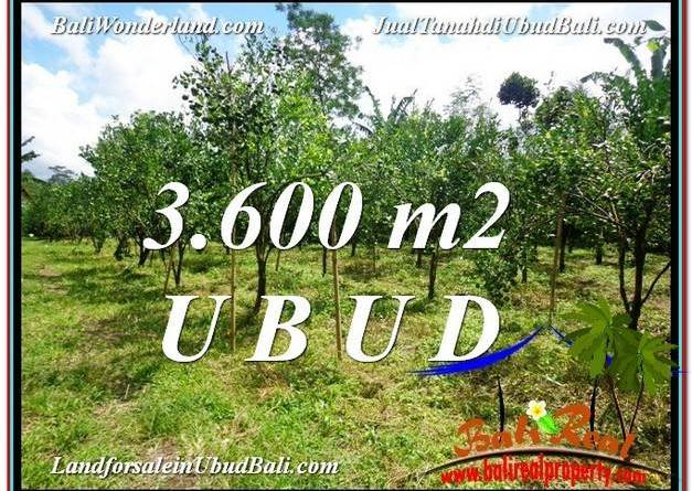 Exotic PROPERTY Ubud Tegalalang 3,600 m2 LAND FOR SALE TJUB599