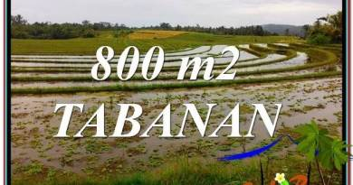 Beautiful LAND IN Tabanan Selemadeg BALI FOR SALE TJTB324