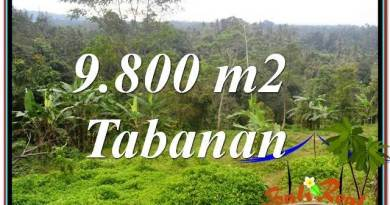 Exotic PROPERTY 9,800 m2 LAND FOR SALE IN Tabanan Selemadeg BALI TJTB350