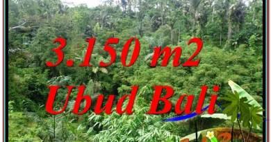 FOR SALE Beautiful PROPERTY 3,150 m2 LAND IN UBUD BALI TJUB608