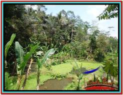 Exotic PROPERTY LAND SALE IN UBUD TJUB519