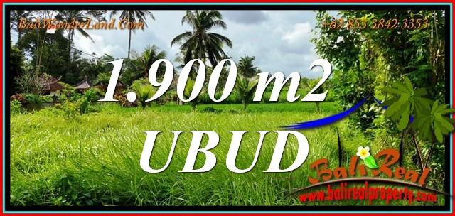 Beautiful PROPERTY 1,900 m2 LAND in UBUD for SALE TJUB811