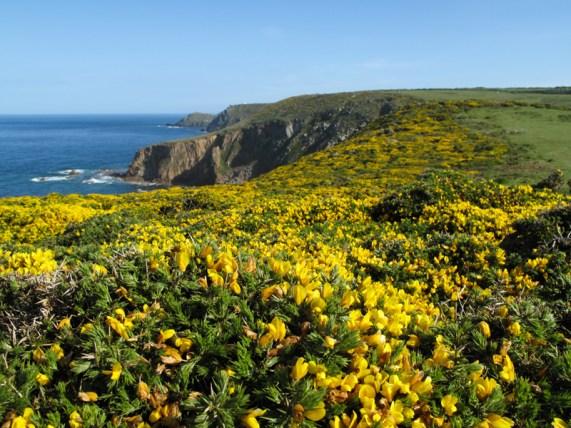wunderschöne Aussichten auf dem Coast Path Richtung Porthcurno