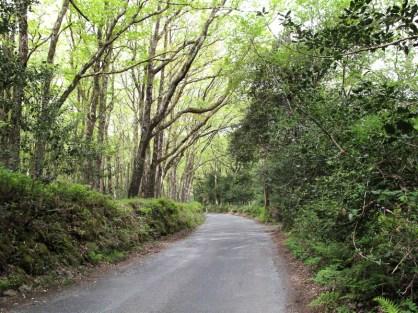 Der Weg aus Roundwood heraus