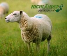 Highlaender-Banner-Extern_24jul13